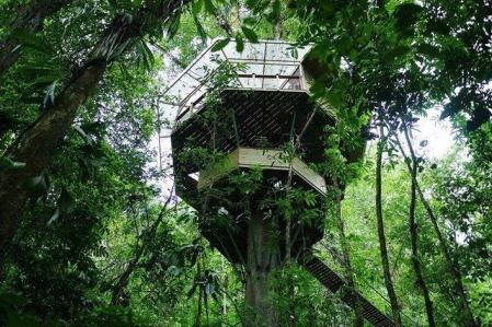 流行树屋素材设计